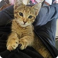 Adopt A Pet :: Sunshine - Benson, MN