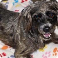 Adopt A Pet :: 'WOODY' - Agoura Hills, CA