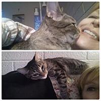 Adopt A Pet :: Jingles McJones - Phoenix, AZ