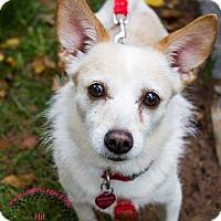 Adopt A Pet :: Princess - Staten Island, NY