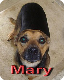 Shepherd (Unknown Type) Mix Dog for adoption in Coleman, Texas - Mary