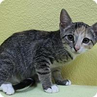 Adopt A Pet :: Rae - Benbrook, TX