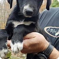 Adopt A Pet :: Zack - Charlestown, RI