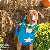 Adopt A Pet :: Jonathan - Waxhaw, NC
