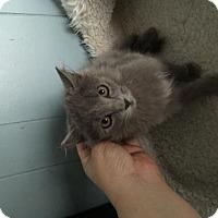Adopt A Pet :: Jean - Long Beach, CA