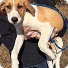 Adopt A Pet :: Percy