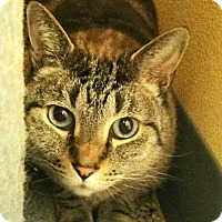 Adopt A Pet :: Frankie - Eastsound, WA