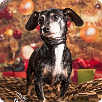 Adopt A Pet :: Hannah *$25 Dec Fee* - Ottawa, KS