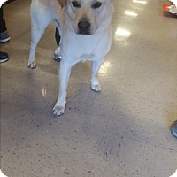 Adopt A Pet :: A - ARCHIE - Raleigh, NC