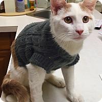 Adopt A Pet :: Leaf - Marlton, NJ
