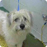 Adopt A Pet :: CASANOVA - Atlanta, GA