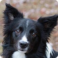 Adopt A Pet :: Twister - Bedminster, NJ