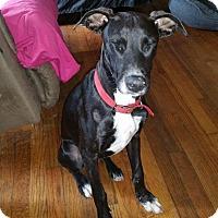 Adopt A Pet :: Lully - Cincinnati, OH