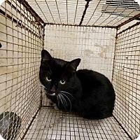 Adopt A Pet :: Charger - New Braunfels, TX