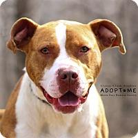 Adopt A Pet :: Pebbles - Edwardsville, IL