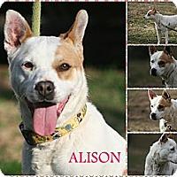 Adopt A Pet :: Alison - Poughkeepsie, NY