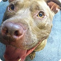 Adopt A Pet :: SCOTTY - Huntington Station, NY