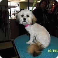 Adopt A Pet :: Penelope - Shawnee Mission, KS