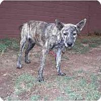 Adopt A Pet :: Fiesta - Phoenix, AZ