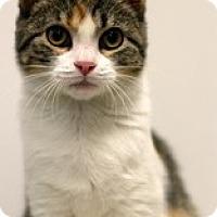 Adopt A Pet :: Prissy - Sacramento, CA