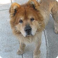 Adopt A Pet :: Simba Adoption Pending - Sacramento, CA
