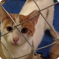 Adopt A Pet :: Blinki - Acme, PA