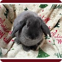 Adopt A Pet :: Tuna - Williston, FL