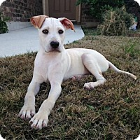 Adopt A Pet :: Grumpy - Austin, TX