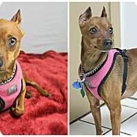 Adopt A Pet :: Sheeva - Forked River, NJ