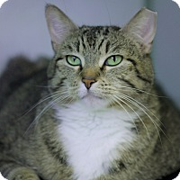 Adopt A Pet :: Mama Cass - Chicago, IL