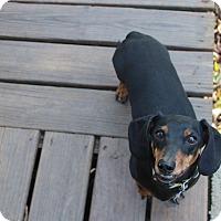 Adopt A Pet :: Gerry - Marcellus, MI