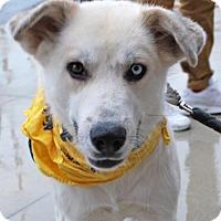 Adopt A Pet :: Aspen - Madison, AL