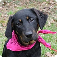 Adopt A Pet :: Helga (ED) - Hagerstown, MD
