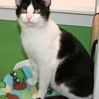 Adopt A Pet :: Buster - Marietta, GA