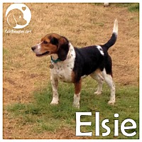 Adopt A Pet :: Elsie - Chicago, IL