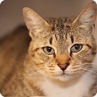 Adopt A Pet :: mila - El Cajon, CA