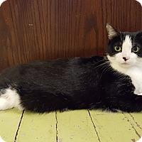 Adopt A Pet :: Dahlia - St. Louis, MO