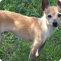 Chihuahua Dog for adoption in Lansing, Michigan - Jeffrey