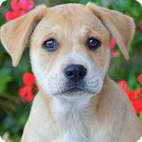 Adopt A Pet :: Catherine von Maysie - Thousand Oaks, CA