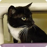 Adopt A Pet :: Barbie Sue - Millersville, MD
