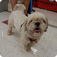 Adopt A Pet :: Maxx - Studio City, CA