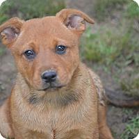 Adopt A Pet :: Halle Joy~ meet me! - Glastonbury, CT