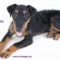 Adopt A Pet :: Simon2 - Needs Foster - Bloomington, MN