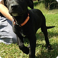 Adopt A Pet :: Bream - Pleasant Plain, OH