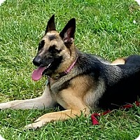 Adopt A Pet :: Abby - Morrisville, NC