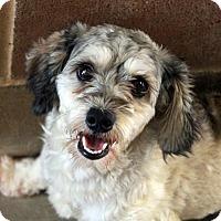 Adopt A Pet :: Ruben - Waco, TX