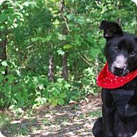 Adopt A Pet :: Cole - New Castle, PA