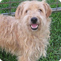 Adopt A Pet :: Eli - Marlborough, MA