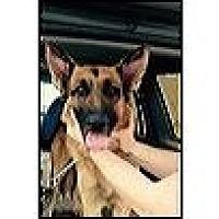 German Shepherd Dog Dog for adoption in Cardwell, Montana - Axel