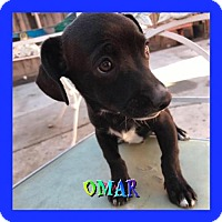 Adopt A Pet :: Omar - Los Angeles, CA